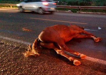 Animal na via de rolamento provoca acidente fatal na BR-235