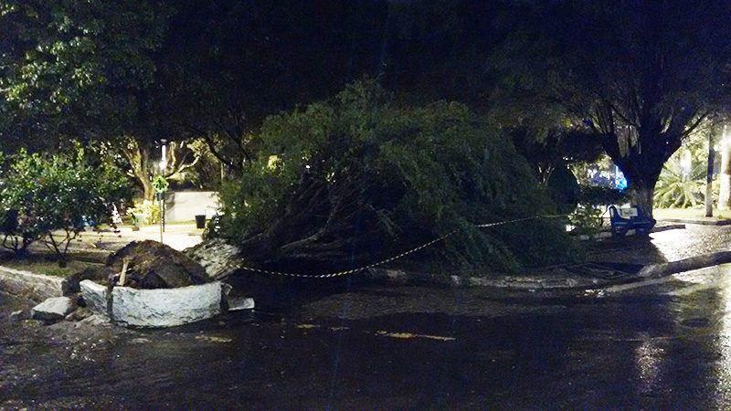 árvore caída centro Itabaiana Sergipe maio 2015
