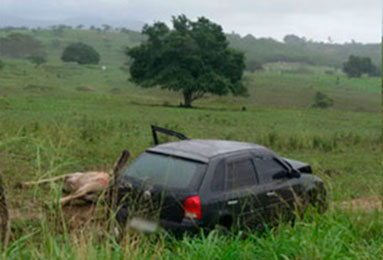 acidente carro animal Rodovia João Paulo II