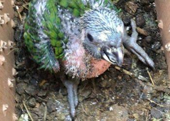 Pássaro silvestre é apreendido pela PRF na BR-235, na região Agreste de Sergipe