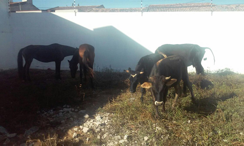 furto gado Frei Paulo Sergipe