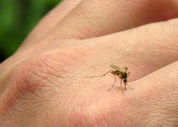 Estado de Sergipe Registra Oitava Morte Causada por Dengue Hemorrágica em 2019