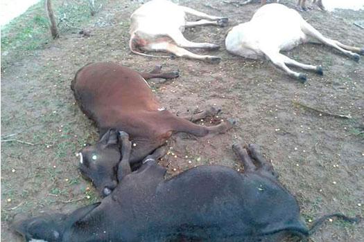 Raio mata animais Tobias Barreto Sergipe