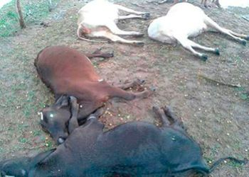 Quatro animais morrem em propriedade rural no Centro Sul do Estado ao serem atingidos por raio