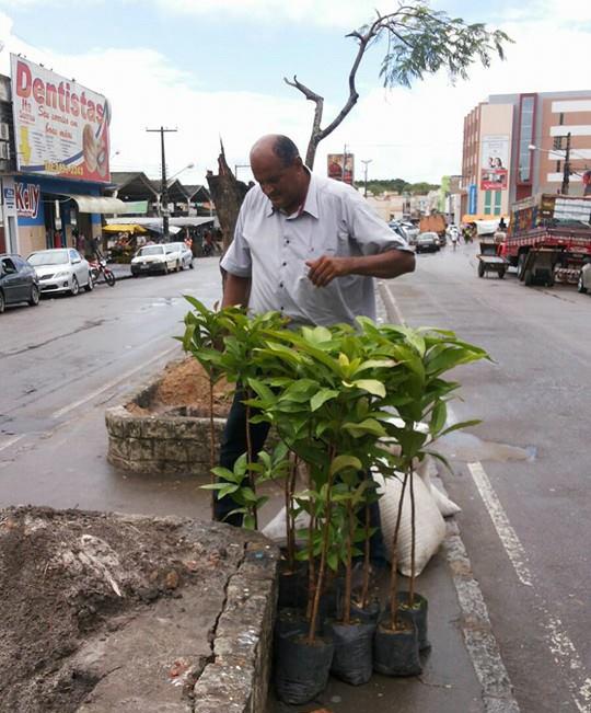 Arvores Avenida Otoniel Dória Itabaiana Sergipe