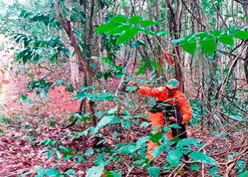 C�es treinam resgate de pessoas desaparecidas na Serra de Itabaiana