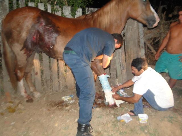 cavalo_resgatado_pm2_640