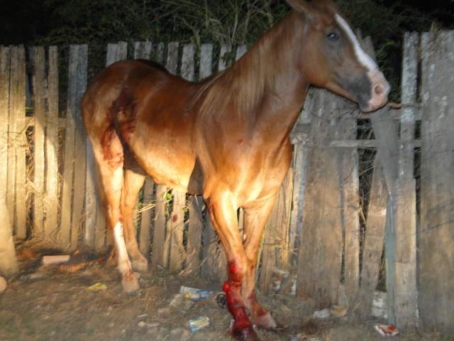 cavalo_resgatado_pm_640